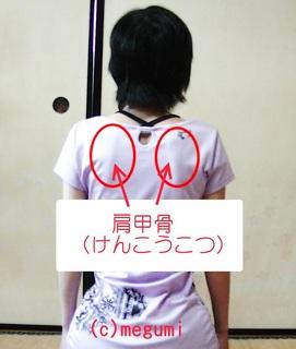 肩甲骨.jpg